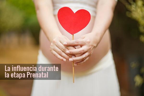 La influencia durante la etapa Prenatal